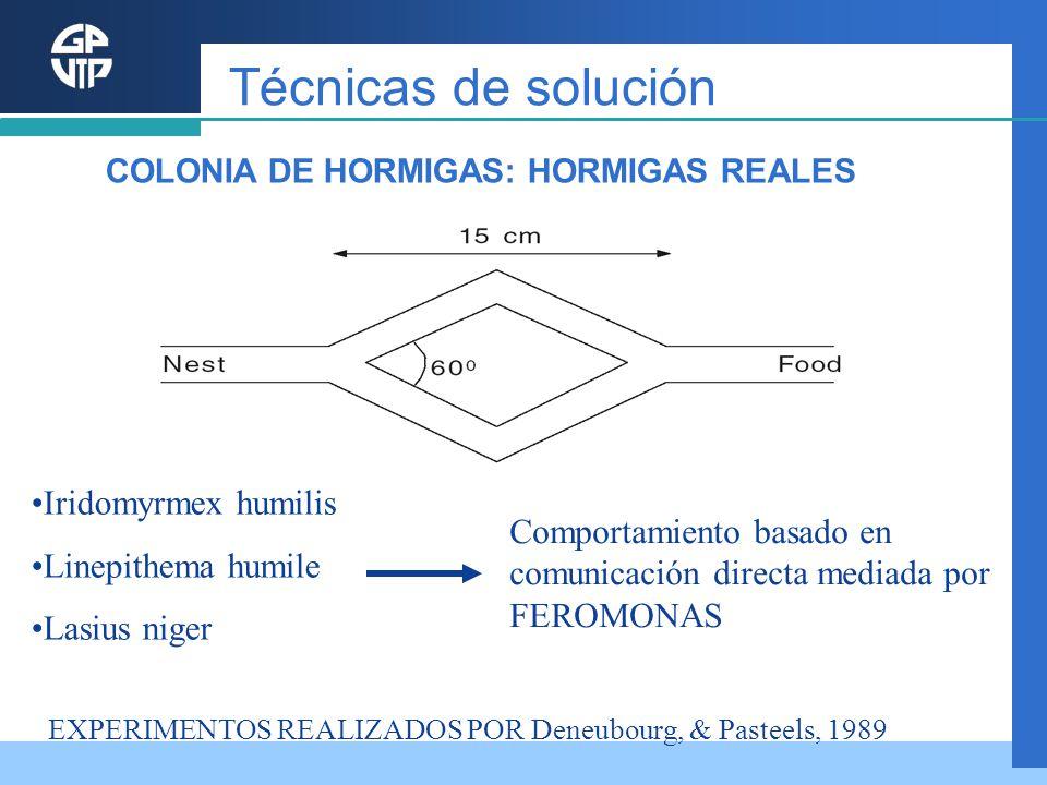 Iridomyrmex humilis Linepithema humile Lasius niger Comportamiento basado en comunicación directa mediada por FEROMONAS EXPERIMENTOS REALIZADOS POR De