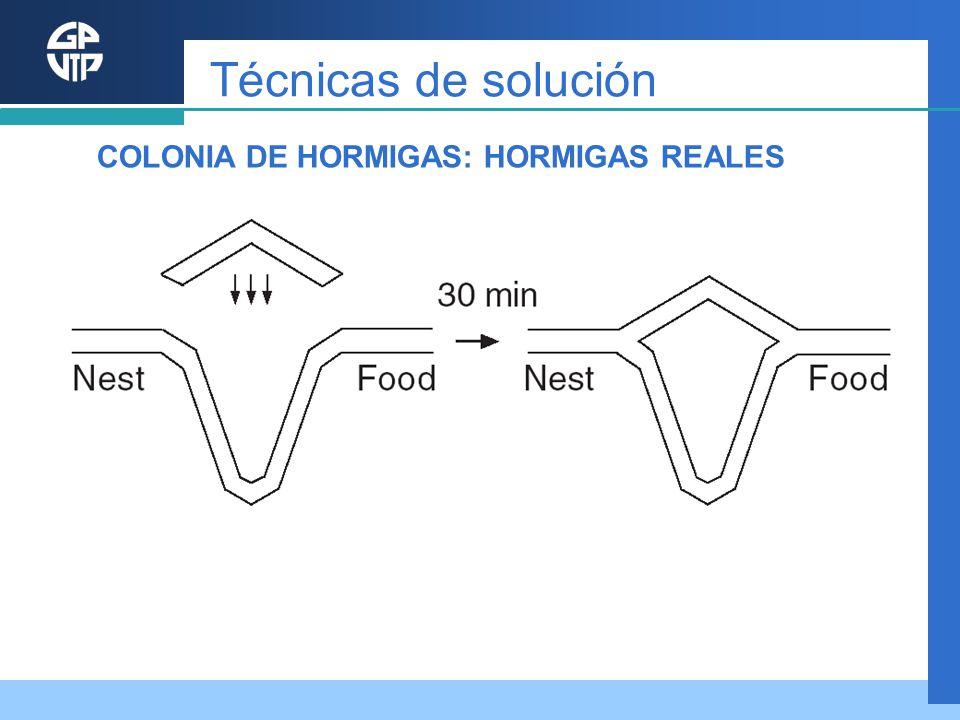 Técnicas de solución COLONIA DE HORMIGAS: HORMIGAS REALES