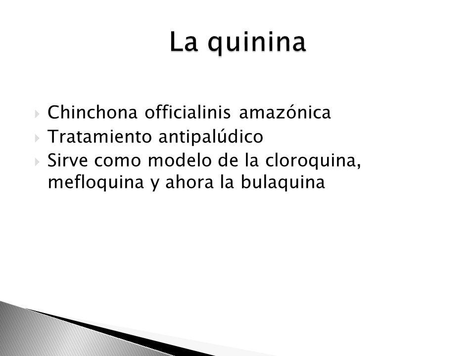 Chinchona officialinis amazónica Tratamiento antipalúdico Sirve como modelo de la cloroquina, mefloquina y ahora la bulaquina