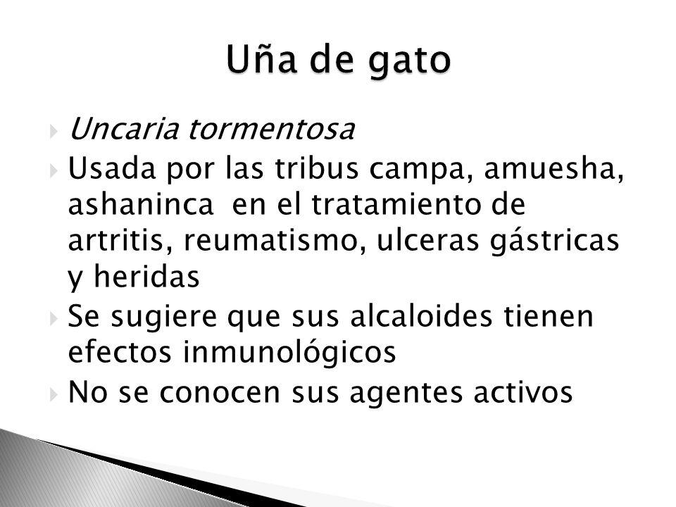 Uncaria tormentosa Usada por las tribus campa, amuesha, ashaninca en el tratamiento de artritis, reumatismo, ulceras gástricas y heridas Se sugiere qu
