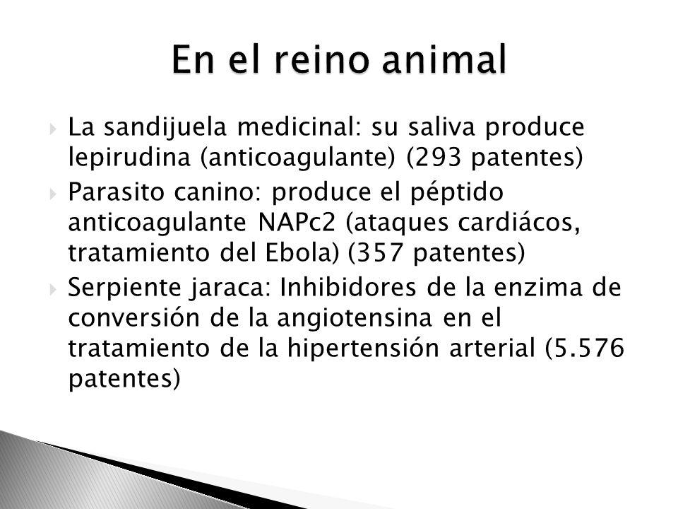La sandijuela medicinal: su saliva produce lepirudina (anticoagulante) (293 patentes) Parasito canino: produce el péptido anticoagulante NAPc2 (ataque