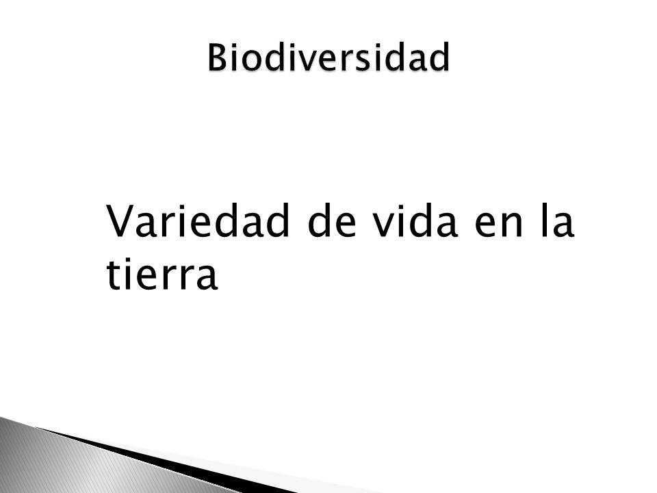 Extraído del árbol tabebuia impetigosa Usado en la Amazonía en el tratamiento de fiebre, malaria, sífilis, infecciones cutáneas y en el resto de Sudamerica para desordenes estomacales Un derivado t.