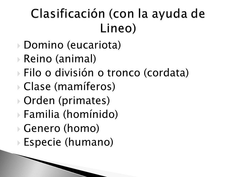 Domino (eucariota) Reino (animal) Filo o división o tronco (cordata) Clase (mamíferos) Orden (primates) Familia (homínido) Genero (homo) Especie (huma