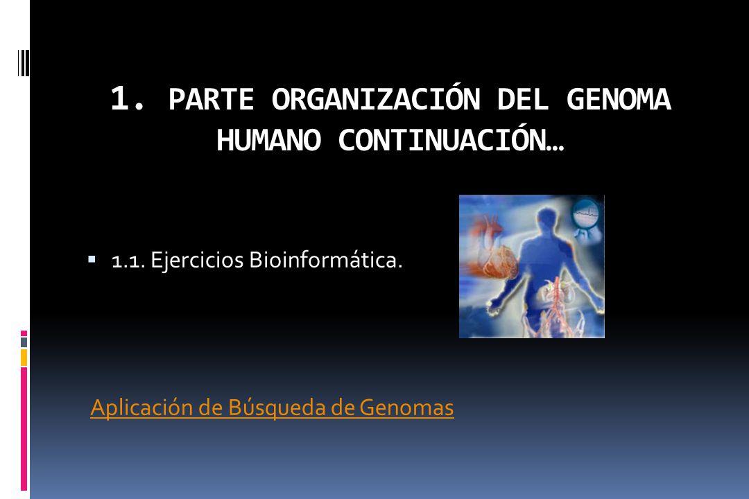 1. PARTE ORGANIZACIÓN DEL GENOMA HUMANO CONTINUACIÓN… 1.1. Ejercicios Bioinformática. Aplicación de Búsqueda de Genomas