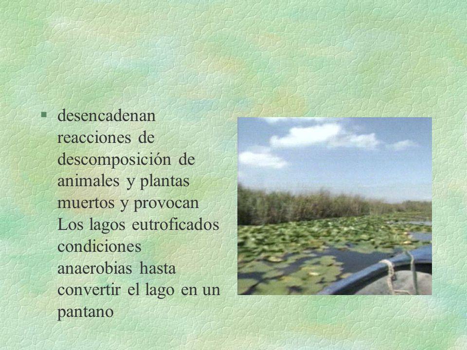 §Los lagos putrefactos producen además H 2 S y metano §La eutroficación es un proceso irreversible