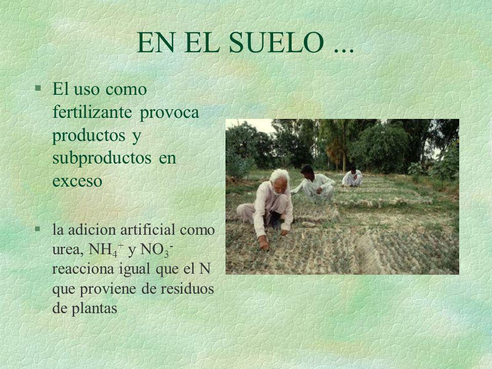 EN PERSONAS Y ANIMALES... §Los NO 3 - consumidos por animales y humanos se convierten en NO 2 - por bacterias del estómago y la vejiga urinaria §Los N