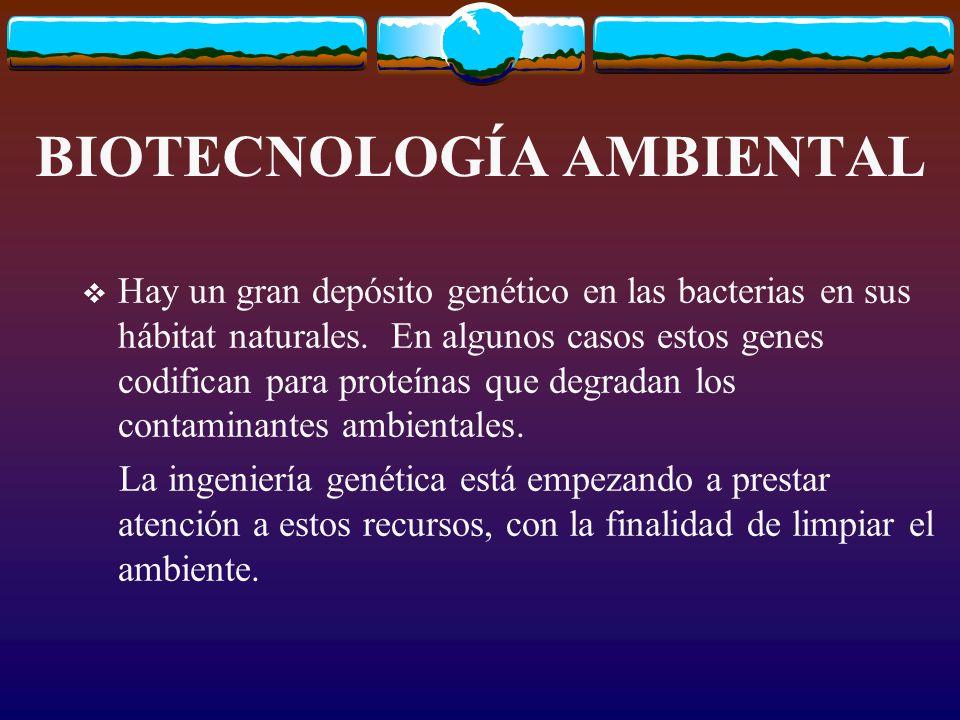 BIOTECNOLOGÍA AMBIENTAL Hay un gran depósito genético en las bacterias en sus hábitat naturales.