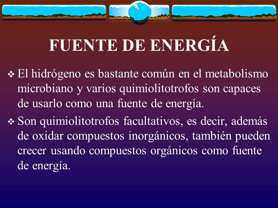 FUENTE DE ENERGÍA El hidrógeno es bastante común en el metabolismo microbiano y varios quimiolitotrofos son capaces de usarlo como una fuente de energía.