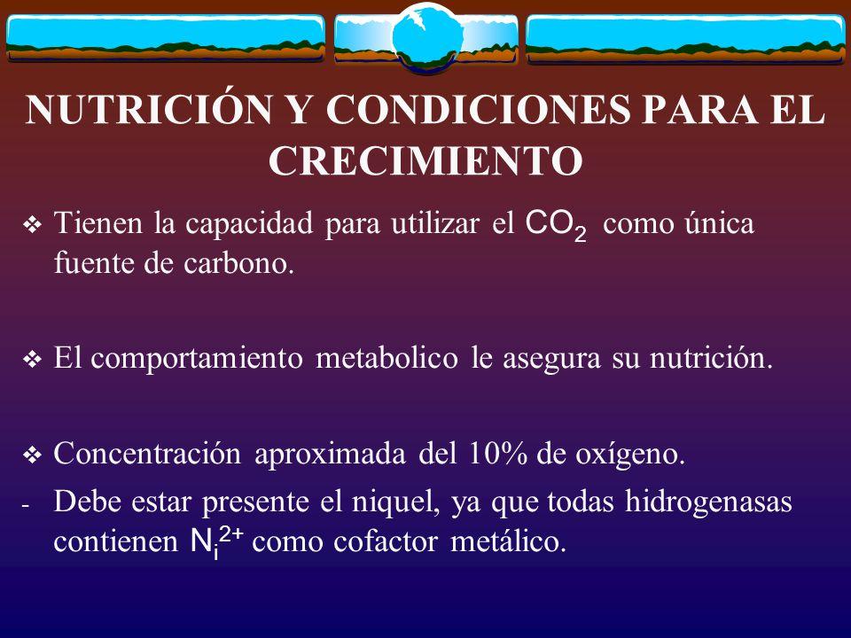 NUTRICIÓN Y CONDICIONES PARA EL CRECIMIENTO Tienen la capacidad para utilizar el CO 2 como única fuente de carbono.