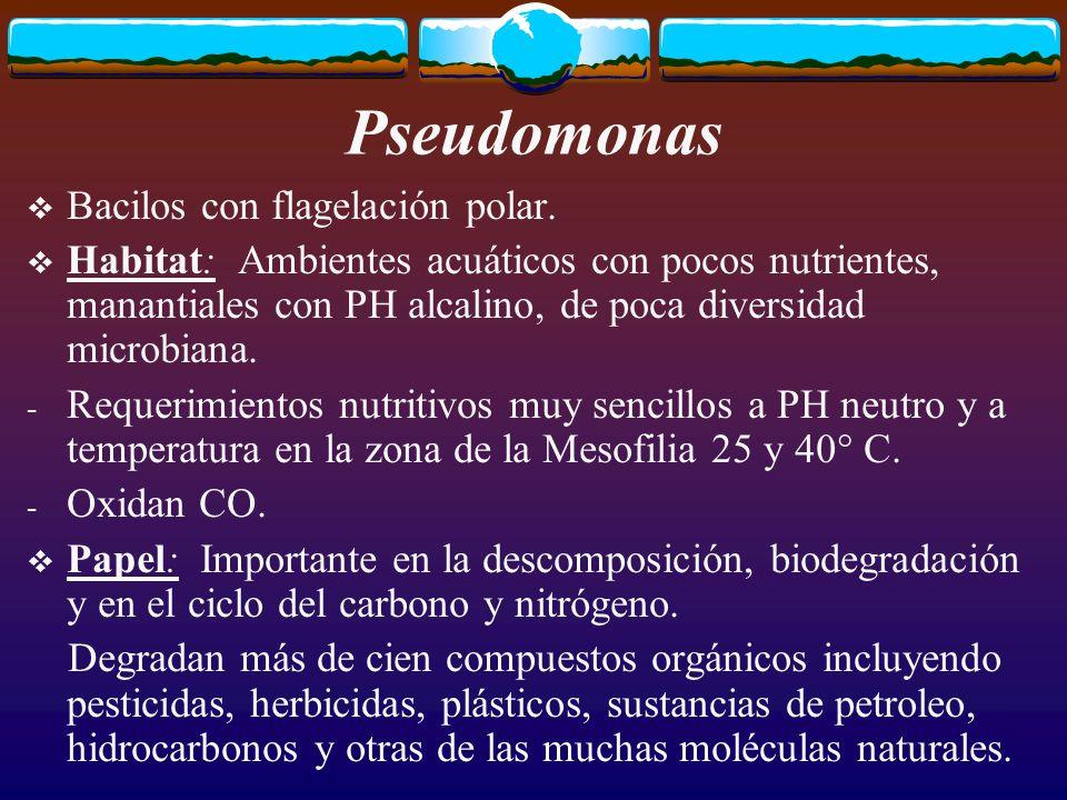 Pseudomonas Transformaciones en el medio: Se encuentra en los sistemas de distribución del agua potable, causando serios problemas de calidad, como suciedad y deterioro en el sabor y en el olor.