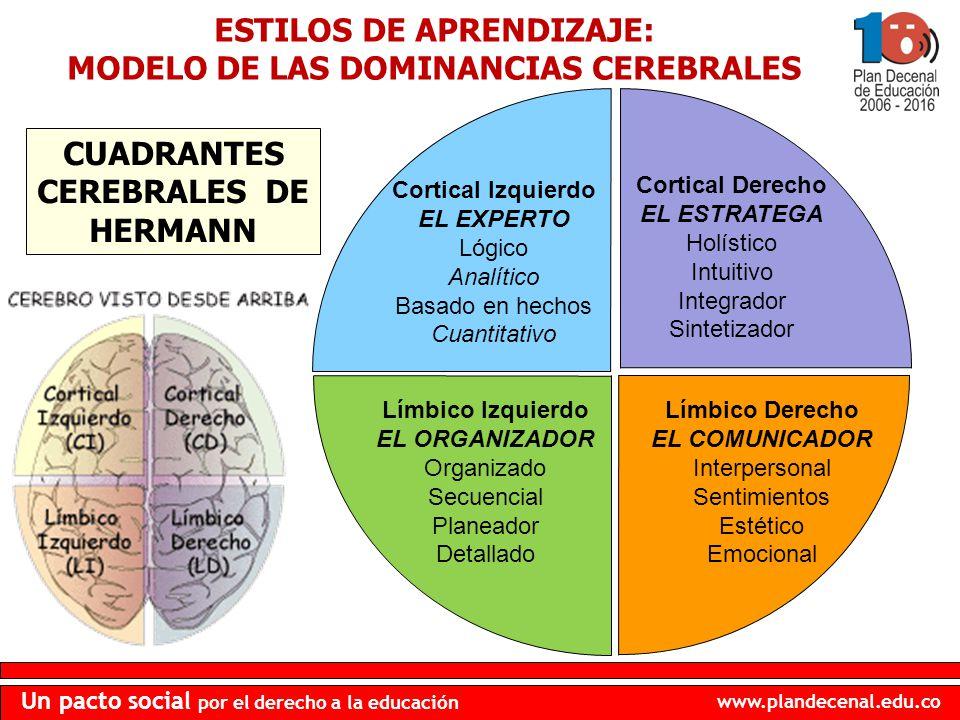 www.plandecenal.edu.co Un pacto social por el derecho a la educación Cortical Izquierdo EL EXPERTO Lógico Analítico Basado en hechos Cuantitativo Cort