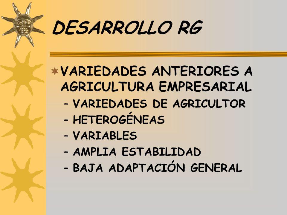 DESARROLLO RG VARIEDADES ANTERIORES A AGRICULTURA EMPRESARIAL –VARIEDADES DE AGRICULTOR –HETEROGÉNEAS –VARIABLES –AMPLIA ESTABILIDAD –BAJA ADAPTACIÓN