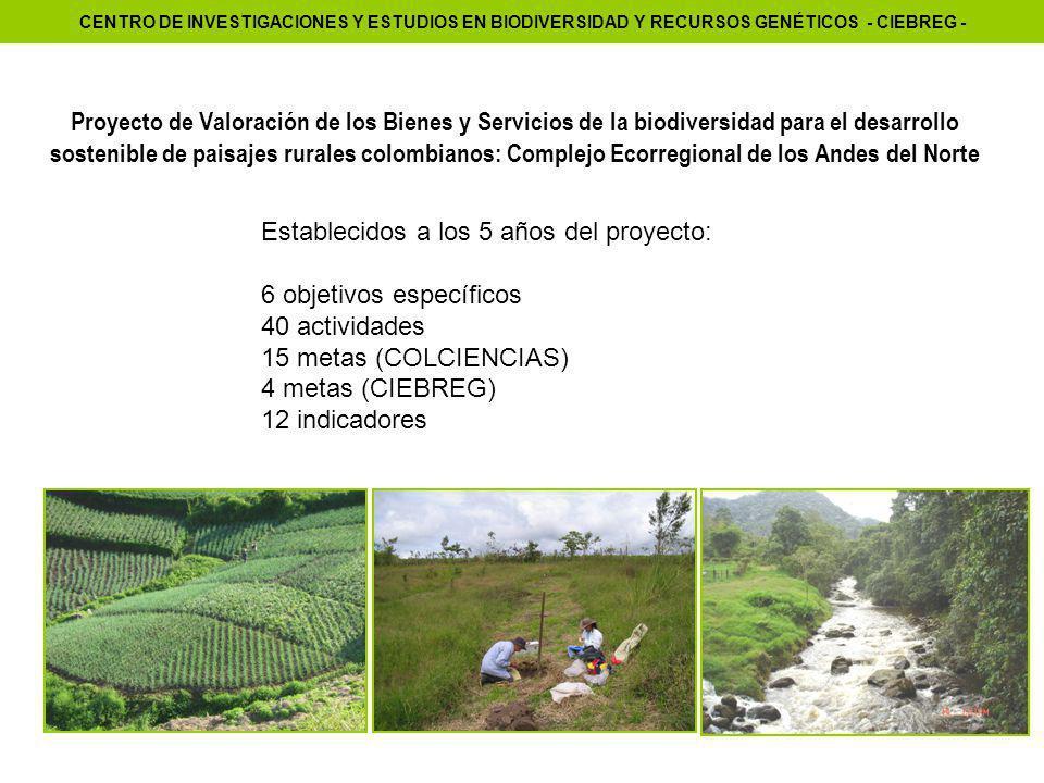 Establecidos a los 5 años del proyecto: 6 objetivos específicos 40 actividades 15 metas (COLCIENCIAS) 4 metas (CIEBREG) 12 indicadores Proyecto de Valoración de los Bienes y Servicios de la biodiversidad para el desarrollo sostenible de paisajes rurales colombianos: Complejo Ecorregional de los Andes del Norte