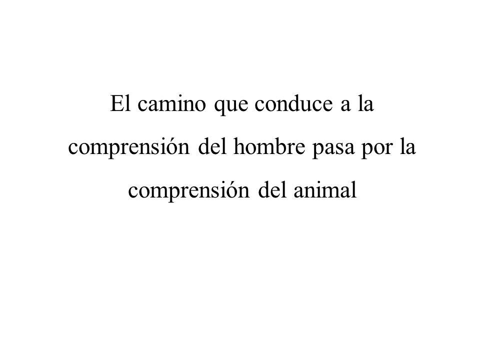 El camino que conduce a la comprensión del hombre pasa por la comprensión del animal