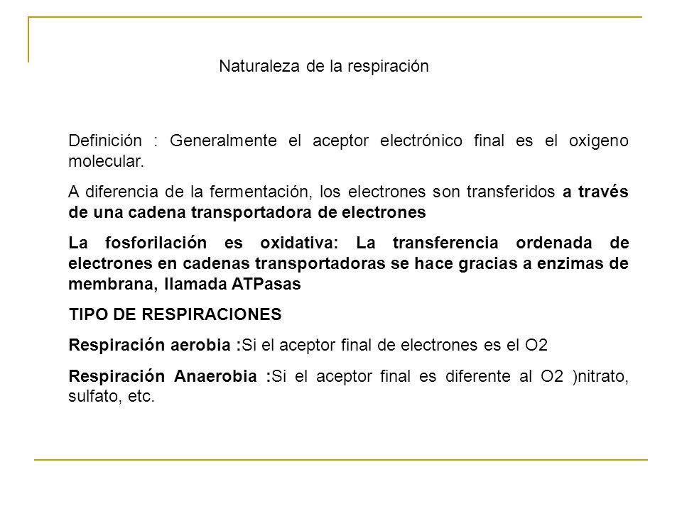 Naturaleza de la respiración Definición : Generalmente el aceptor electrónico final es el oxigeno molecular.