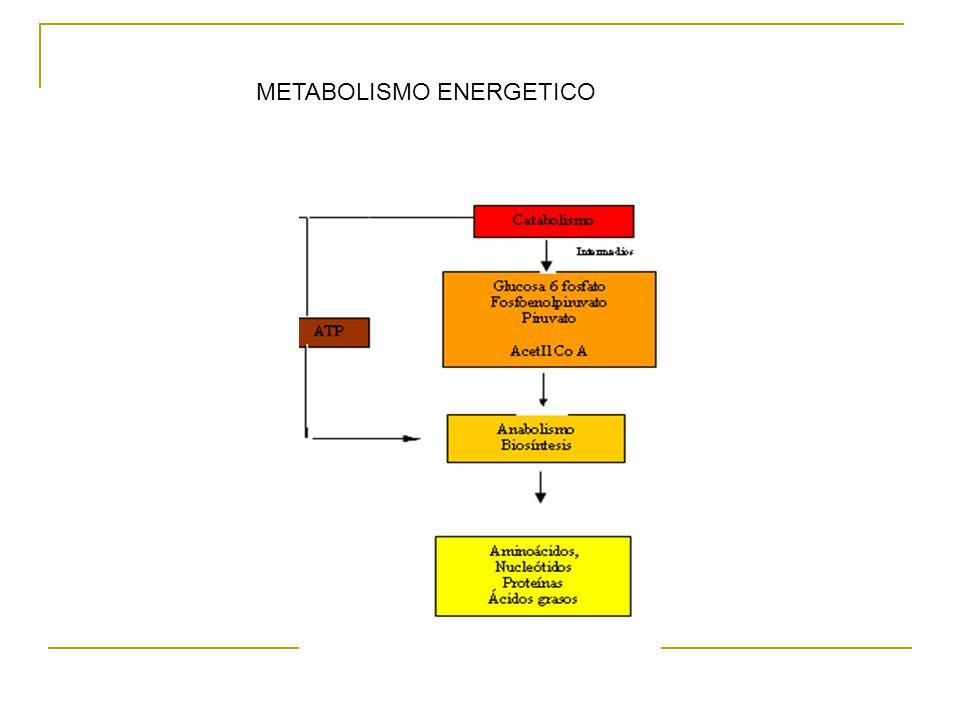Clasificación de los Microorganismos por tipo de nutrición : a.Seguún la fuente de energ{ia : b.Fototrofos, sí utilizan la luz Quimiotrofos : Si utilizan sustancias químicas : Según la fuente de Carbono : Compuestos organicos : Qumioorganotrofos Compuestos inorganicos : Quimiolitotrofos Procesos de obtención de energía química o ATP -Fermentación -Respiración