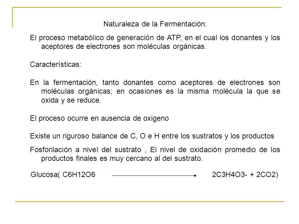 Vías de fermentación La vía fructosa – difosfato (FDP) también conocida como glicólisis o vía de Embden-Meyerhof la vía de las pentosas – fosfato (PP) o de Warburg-Dickens Horecker La vía de Entner-Doudorff p KDPG Tipo de fermentaciónProducto(s) Fermentación lácticaLactato Fermentación alcohólicaetanol, CO 2 Fermentación ácida-mixtaetanol, succinato, acetato, formiato, lactato, CO 2, H 2 Fermentación butilénglicólicabutilénglicol, CO 2 Fermentación aceto-butíricaacetato, acetona, butirato, butanol, etanol, CO 2, H 2