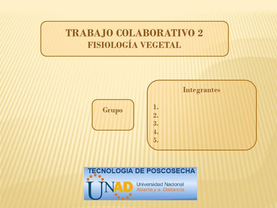 TRABAJO COLABORATIVO 2 FISIOLOGÍA VEGETAL Integrantes 1. 2. 3. 4. 5. Grupo