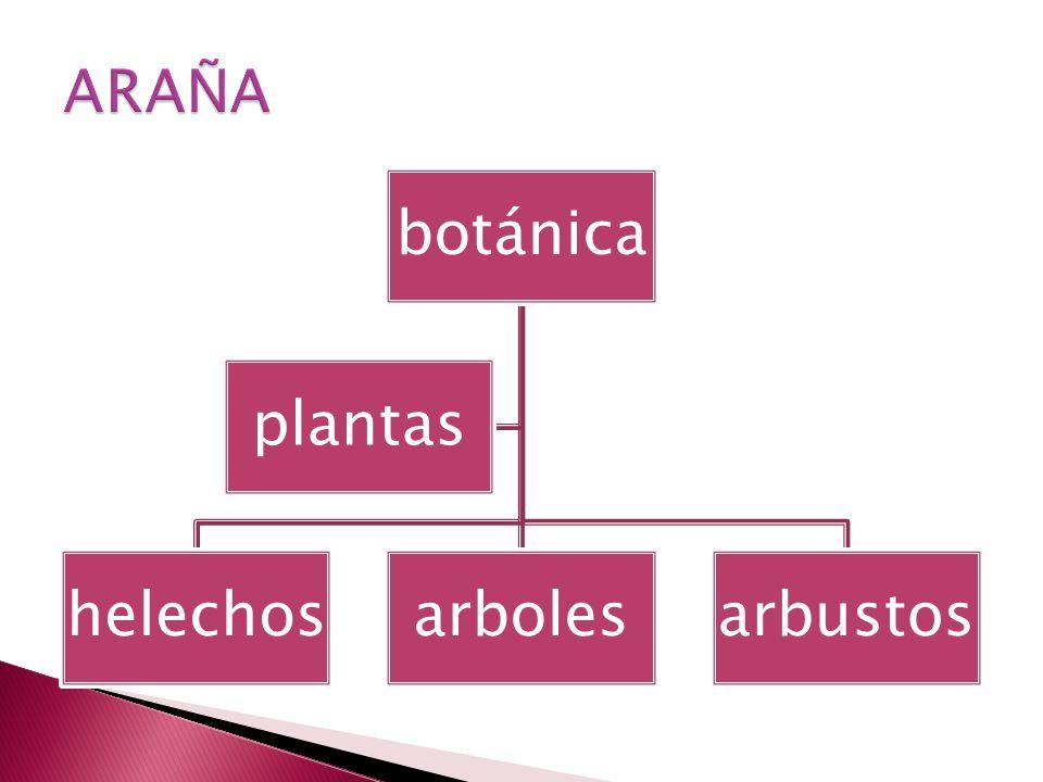 botánica helechosarbolesarbustos plantas