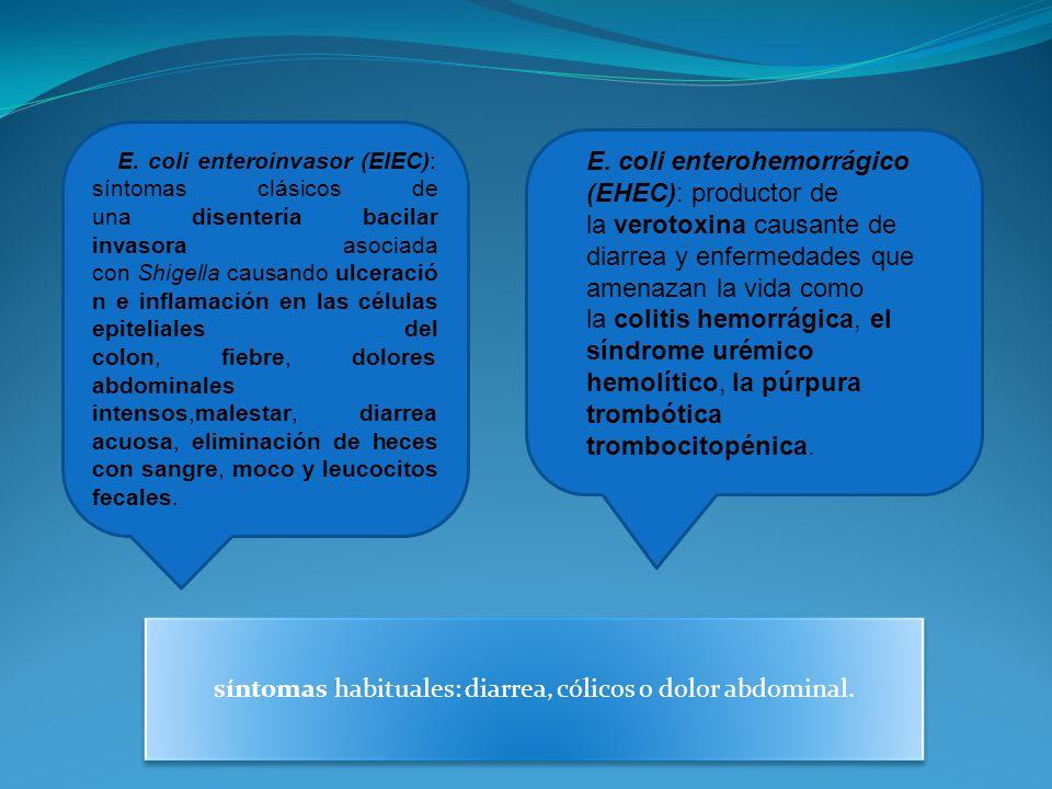 E. coli enteroinvasor (EIEC): síntomas clásicos de una disentería bacilar invasora asociada con Shigella causando ulceració n e inflamación en las cél