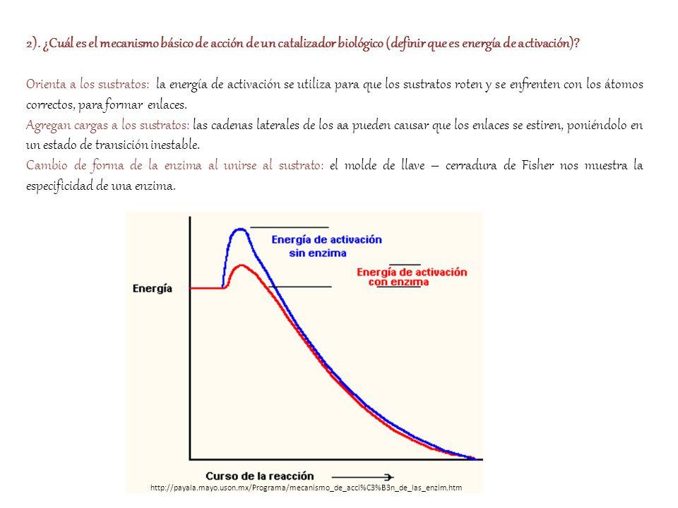 2). ¿Cuál es el mecanismo básico de acción de un catalizador biológico (definir que es energía de activación)? Orienta a los sustratos: la energía de