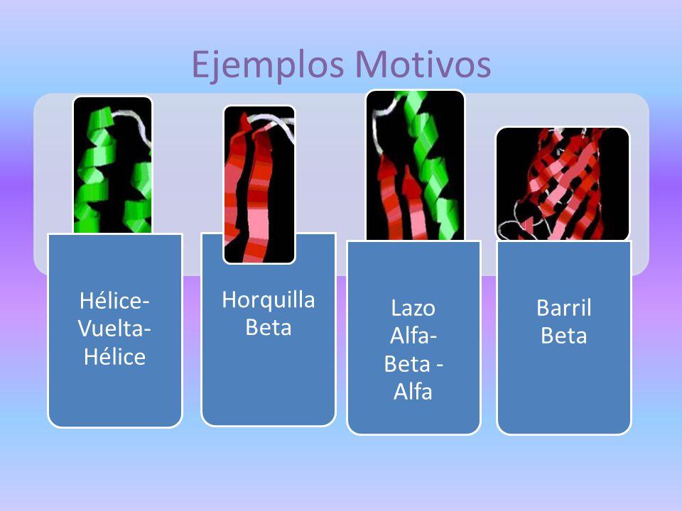 Ejemplos Motivos Horquilla Beta Hélice- Vuelta- Hélice Lazo Alfa- Beta - Alfa Barril Beta