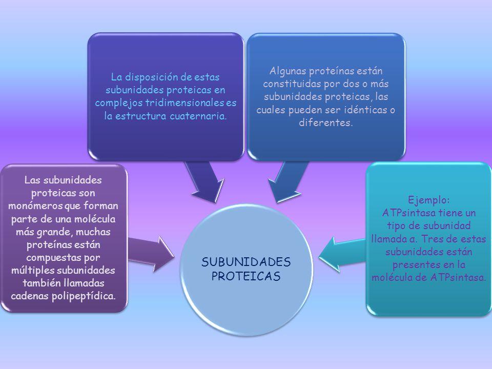 SUBUNIDADES PROTEICAS Las subunidades proteicas son monómeros que forman parte de una molécula más grande, muchas proteínas están compuestas por múlti