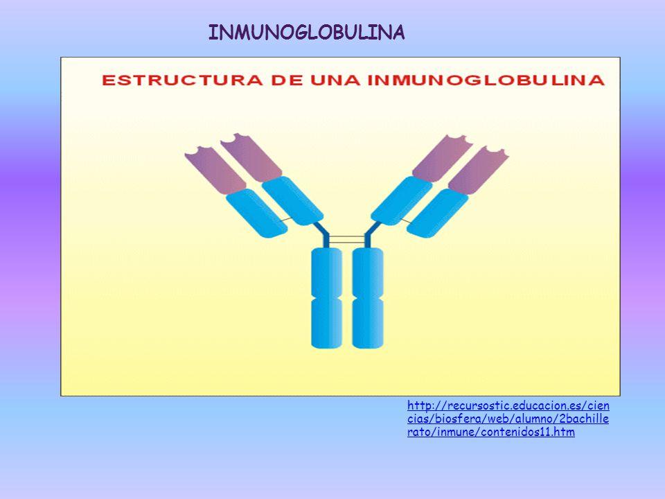 INMUNOGLOBULINA http://recursostic.educacion.es/cien cias/biosfera/web/alumno/2bachille rato/inmune/contenidos11.htm