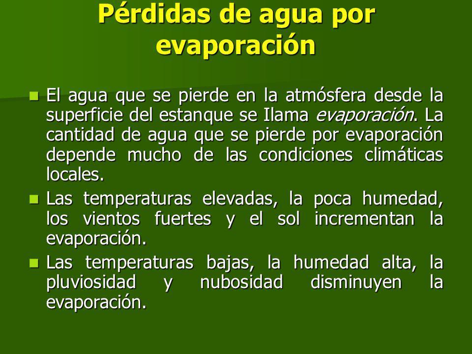 Pérdidas de agua por evaporación El agua que se pierde en la atmósfera desde la superficie del estanque se Ilama evaporación.