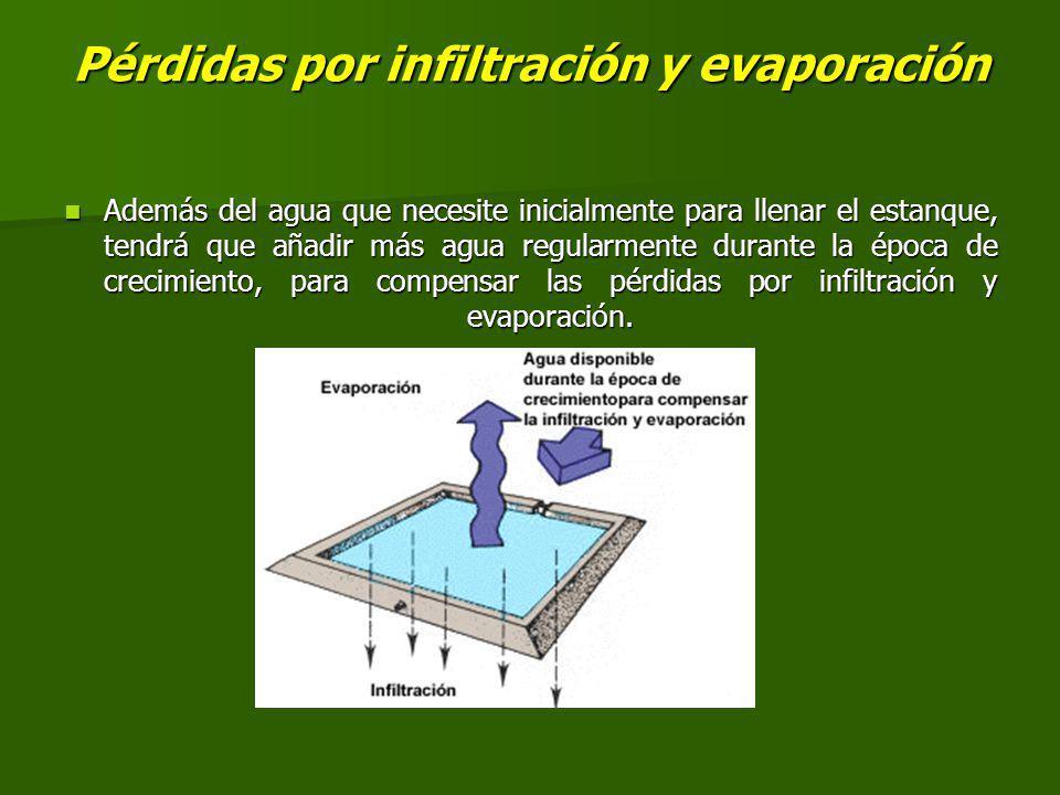 Pérdidas por infiltración y evaporación Además del agua que necesite inicialmente para llenar el estanque, tendrá que añadir más agua regularmente durante la época de crecimiento, para compensar las pérdidas por infiltración y evaporación.