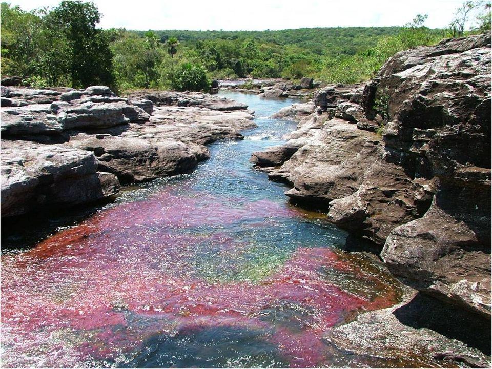 Caño Cristales está declarado como Patrimonio Biológico de la Humanidad. El mejor momento del año para visitar el río es durante el verano de Junio a