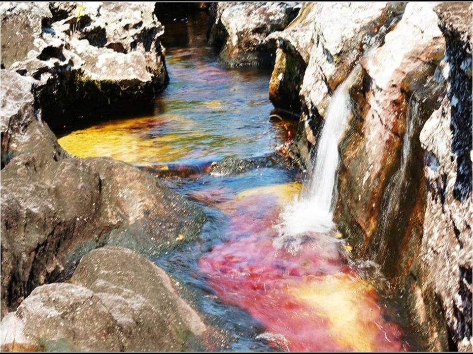 Caño Cristales es un rio denominado el más hermoso del mundo Incluso, fue llamado