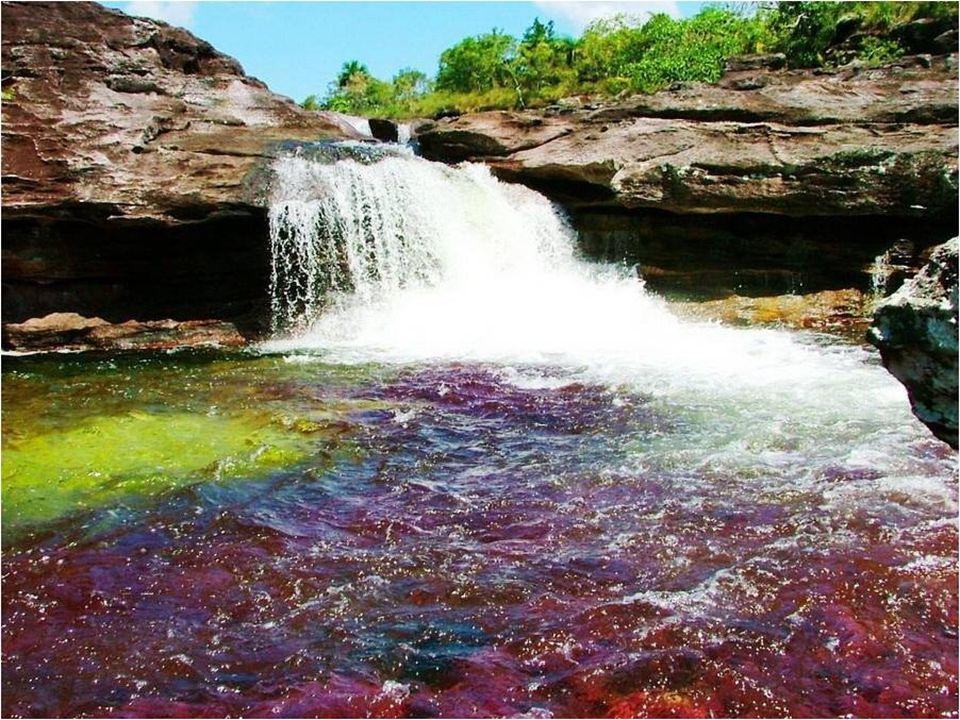 Caño Cristales está declarado como Patrimonio Biológico de la Humanidad.