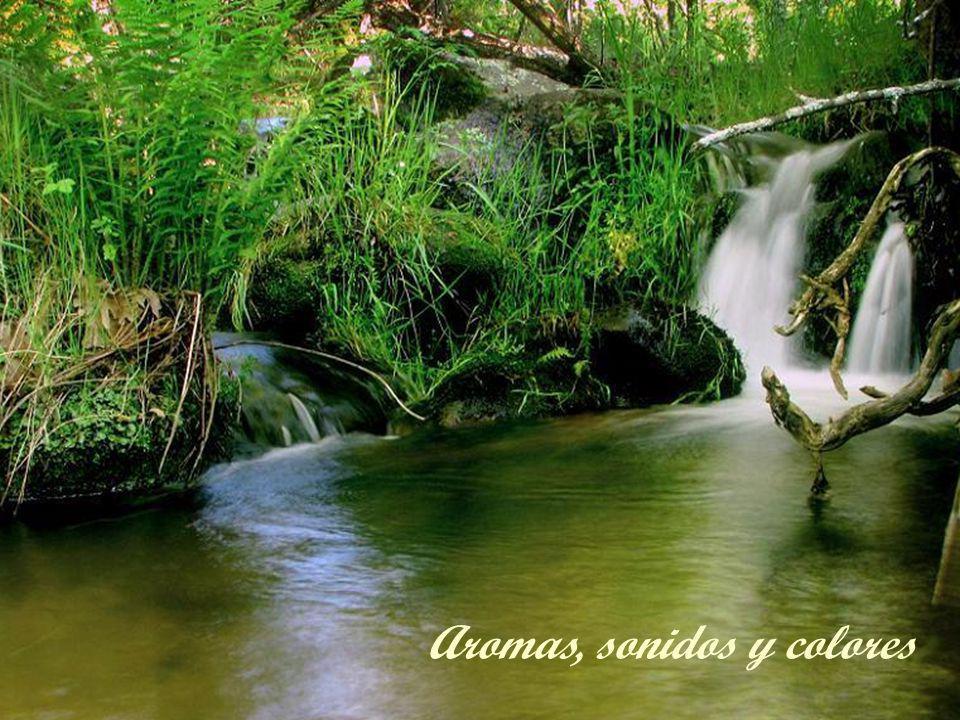 Aromas, sonidos y colores