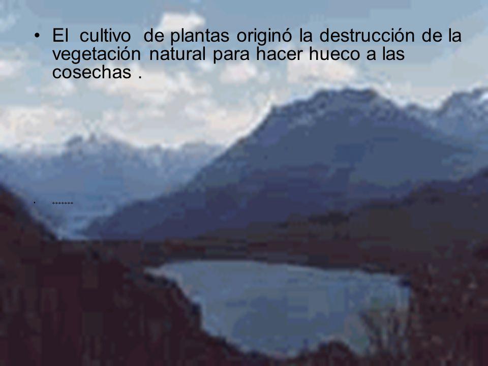 El cultivo de plantas originó la destrucción de la vegetación natural para hacer hueco a las cosechas.