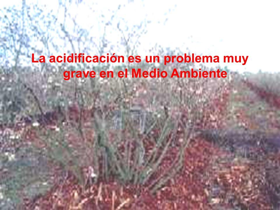 La acidificación es un problema muy grave en el Medio Ambiente