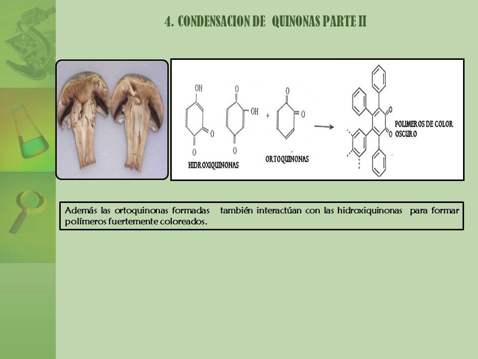 Además las ortoquinonas formadas también interactúan con las hidroxiquinonas para formar polímeros fuertemente coloreados. 4. CONDENSACION DE QUINONAS