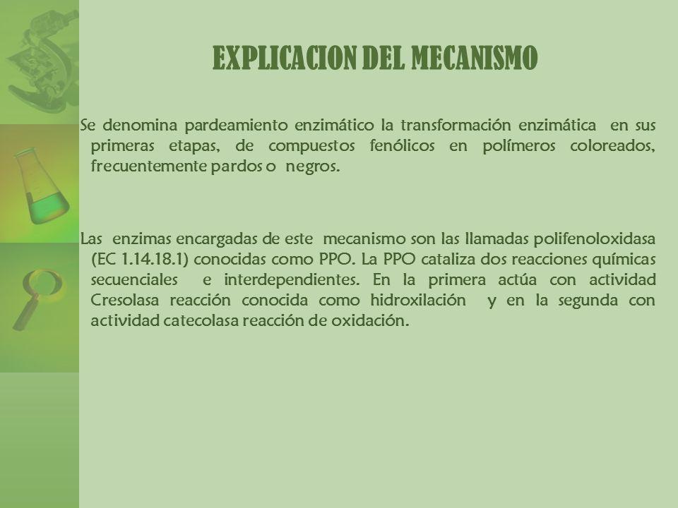 EXPLICACION DEL MECANISMO Se denomina pardeamiento enzimático la transformación enzimática en sus primeras etapas, de compuestos fenólicos en polímero