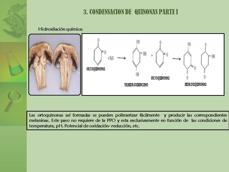 3. CONDENSACION DE QUINONAS PARTE I Las ortoquinonas así formadas se pueden polimerizar fácilmente y producir las correspondientes melaninas. Este pas