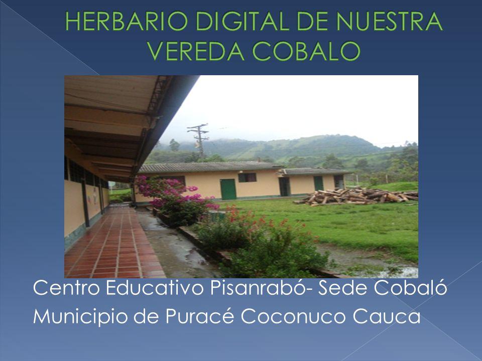 Centro Educativo Pisanrabó- Sede Cobaló Municipio de Puracé Coconuco Cauca