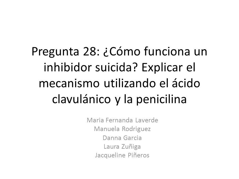Pregunta 28: ¿Cómo funciona un inhibidor suicida? Explicar el mecanismo utilizando el ácido clavulánico y la penicilina Maria Fernanda Laverde Manuela