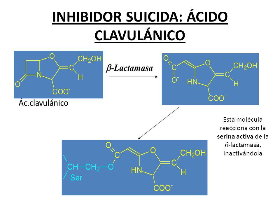 INHIBIDOR SUICIDA: ÁCIDO CLAVULÁNICO Esta molécula reacciona con la serina activa de la -lactamasa, inactivándola
