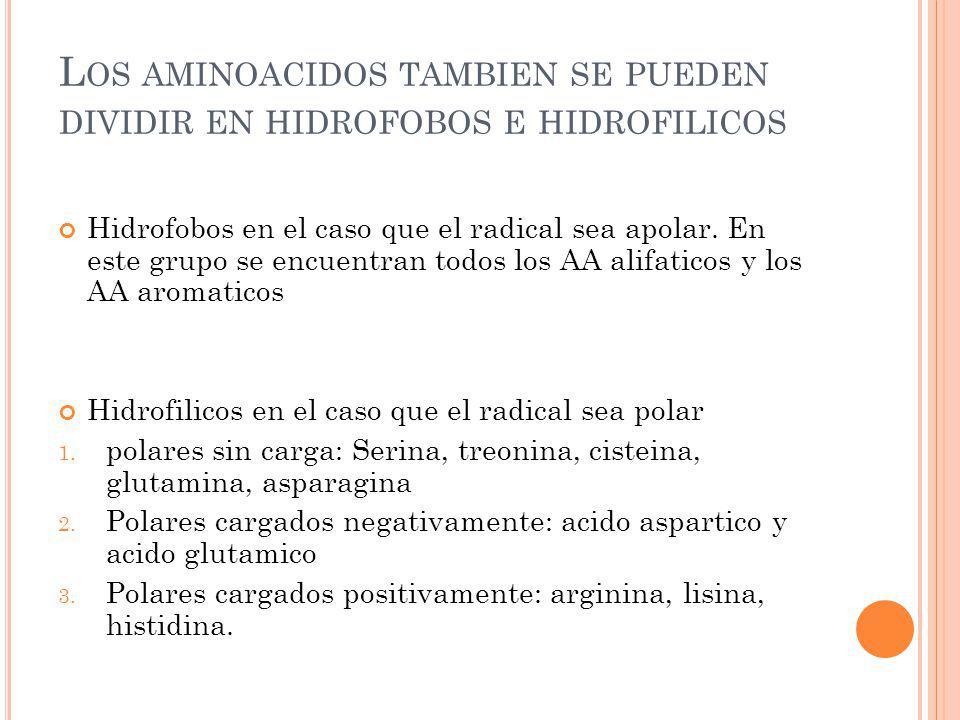 L OS AMINOACIDOS TAMBIEN SE PUEDEN DIVIDIR EN HIDROFOBOS E HIDROFILICOS Hidrofobos en el caso que el radical sea apolar. En este grupo se encuentran t