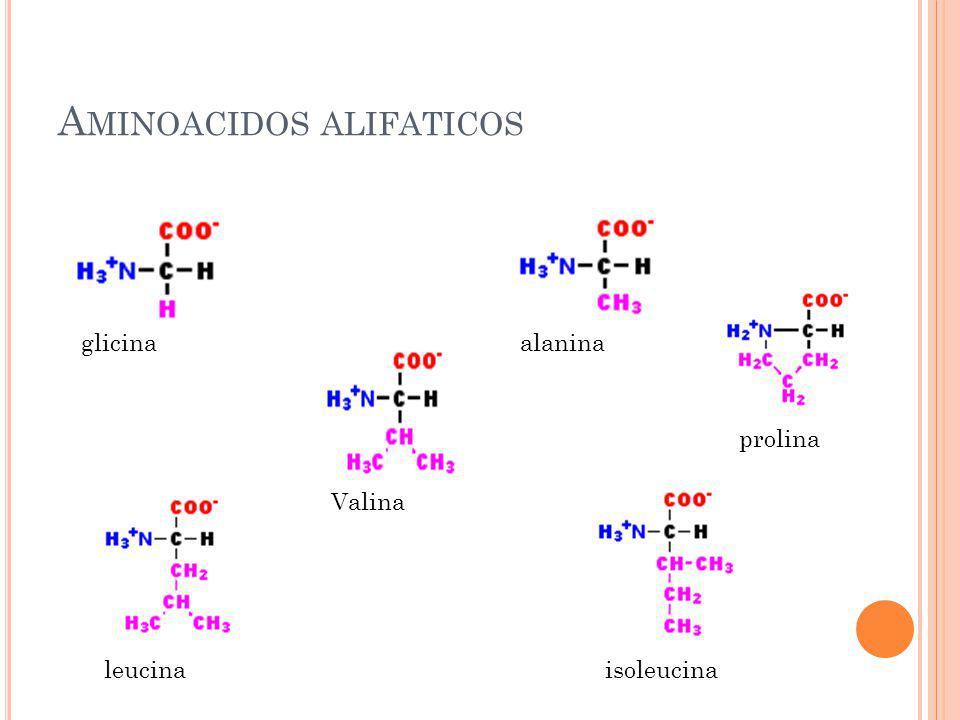 A MINOACIDOS ALIFATICOS glicinaalanina Valina leucinaisoleucina prolina
