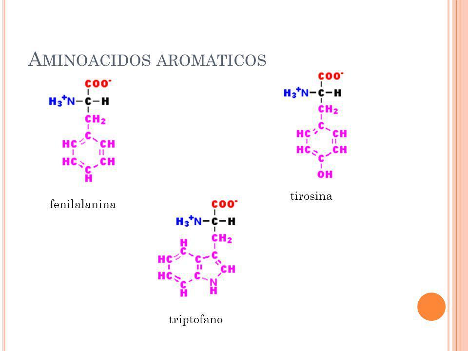 A MINOACIDOS AROMATICOS fenilalanina tirosina triptofano