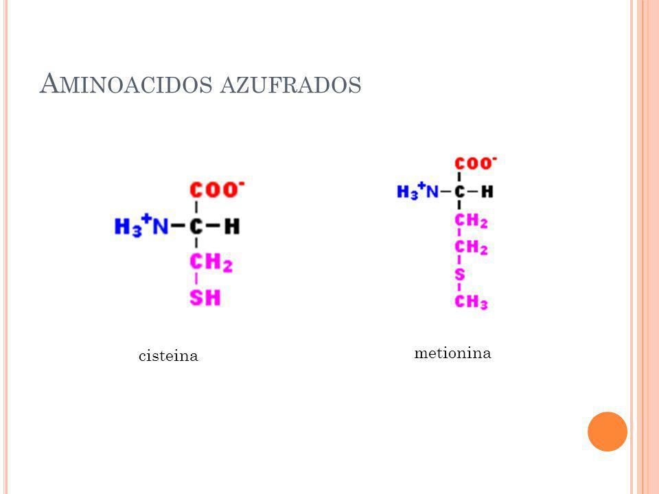 A MINOACIDOS AZUFRADOS cisteina metionina