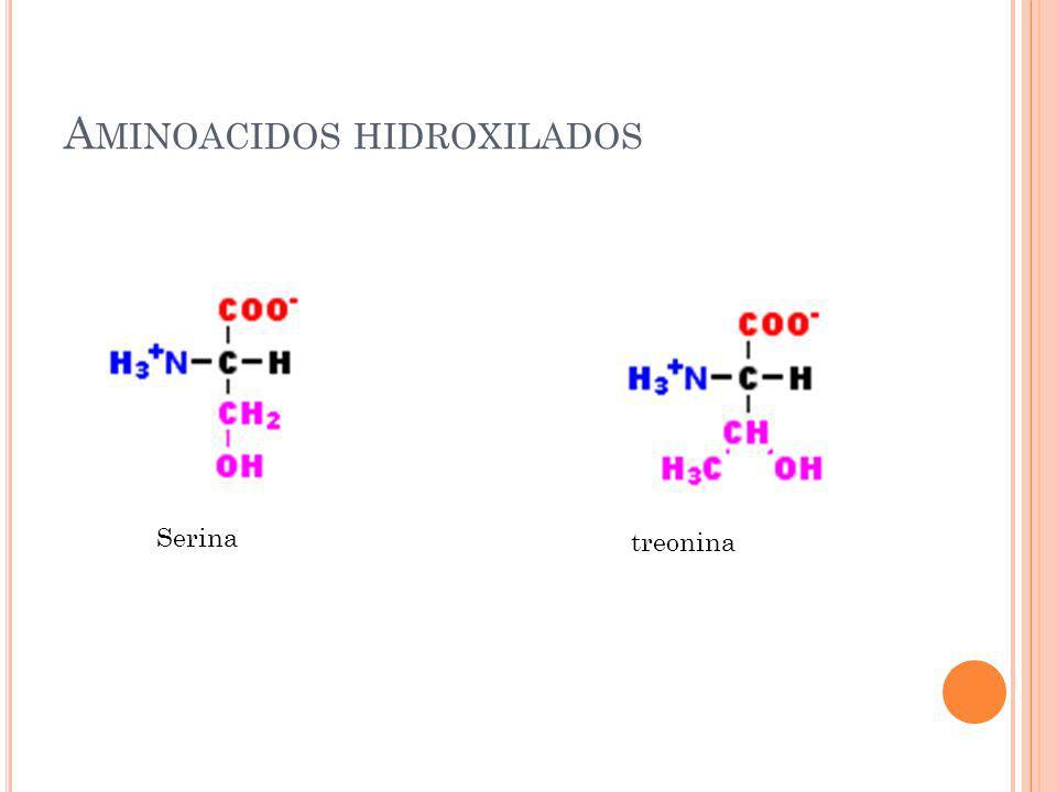 A MINOACIDOS HIDROXILADOS Serina treonina