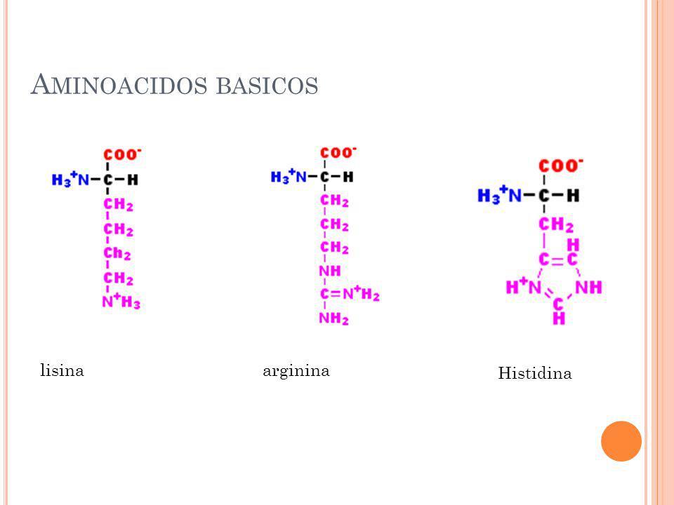 A MINOACIDOS BASICOS lisinaarginina Histidina