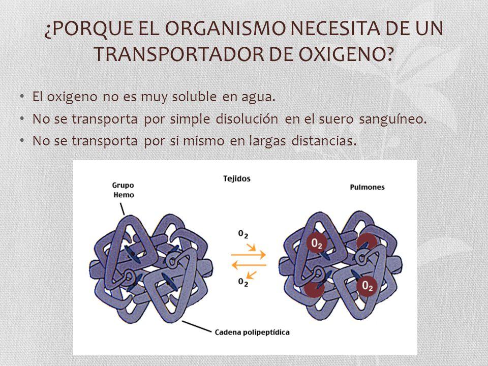 ¿PORQUE EL ORGANISMO NECESITA DE UN TRANSPORTADOR DE OXIGENO? El oxigeno no es muy soluble en agua. No se transporta por simple disolución en el suero