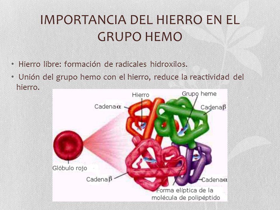 IMPORTANCIA DEL HIERRO EN EL GRUPO HEMO Hierro libre: formación de radicales hidroxilos. Unión del grupo hemo con el hierro, reduce la reactividad del
